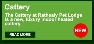Rathealy Pet Lodge Cattery
