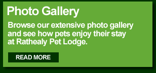 Rathealy Pet Lodge Photo Gallery